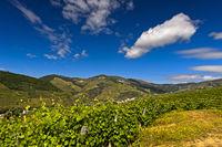 Sommerlandschaft mit Weinbergen in der Alto Douro Region, Pinhao, Douro Tal, Portugal