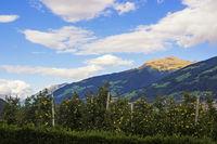 Blick auf die Alpen bei Meran mit Apfelbäumen im Vordergrund