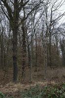 alter Laubwald... Hambacher Forst *Nordrhein-Westfalen*