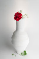 White pottery vase and red flower on white background