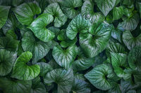 Green tropical plant foliage view from above