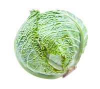 green cabbagehead of fresh savoy cabbage