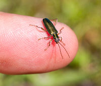 Small bug sitting on a finger