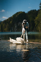 Girl feeds a white swan on the shore.