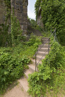 Ivy overgrown stairs in castle ruin