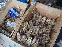 Frische Austern auf einem Markt in der Bretagne