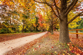 Country roads in Autumn lined with maples and deciduous trees