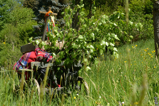 A handcart on a green meadow in spring on fathers day