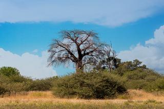 Moremi game reserve landscape, Africa wilderness