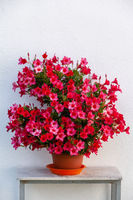 Sommerliche Blumen