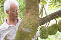 Farmer and durian tree.