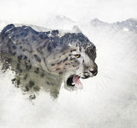Double exposure of a snow leopard and mountains