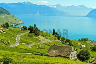 Weinbauregion Lavaux am Genfersee, Riex, Waadt, Schweiz