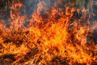 Dry grass blazes among bushes, fire in bushes area