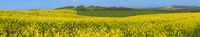 Panorama with yellow and green hills