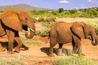 An elephant and his little. One in a walk in the savanna