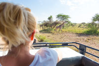 Woman on african wildlife safari observing giraffe grazing in the savannah from open roof safari jeep