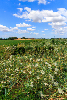 Wild flowers, field, Umbria, Italy