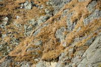 natural rock with dried grass