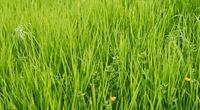 Grüner Gras Wiese Hintergrund