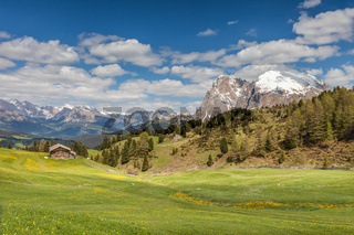 Alpine meadows on the Alpe di Siusi with view to the Plattkofel