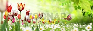 Blumen 1031.jpg