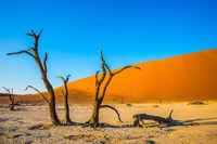 Exotic trip to Namibia