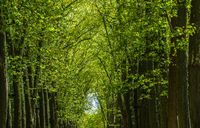 Walkway, lane, path with green trees in the forest