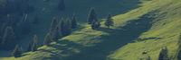 Green landscape in the Canton of Grisons, Switzerland. Forest in Obermutten.