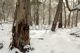 Australian bushland covered in layers of snow