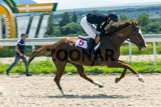 Horse racing for the prize of Restrictive in Pyatigorsk.