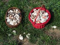 Pilzkörbe mit Wiesenchampignons