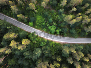 The asphalt road through the forest . Aerial view from the drone at sunset in the summer.