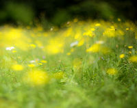 Abstract yellow flowers background