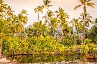 Palm trees at lagoon on Big Island, Hawaii