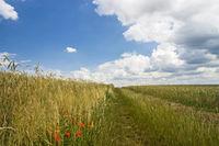 Feldweg zwischen Getreidefeldern