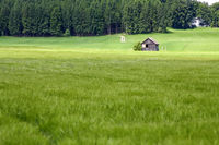 green summer meadow with trees