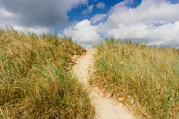 Sand dunes with grass at the beach