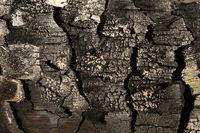 Angebranntes Holz als Hintergrund oder Textur