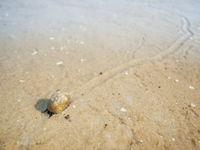 Schnecke mit Sandspur in den Gezeiten_horizontal