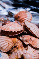 Fresh Shellfish display on English Market for sale. Cork/Ireland
