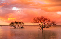 Sunset and storm clouds over mangroves