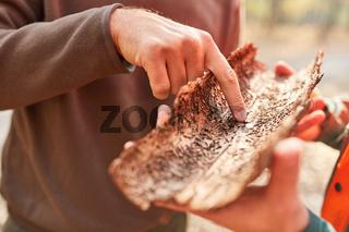 Förster zeigt auf Baumrinde mit Borkenkäfer Befall