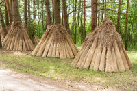 Reed drying for roofing