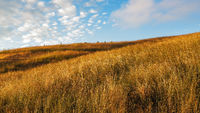 Grassy Field with Cloudy Skies