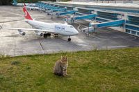 Istanbul, Turkey - March 23, 2019: Cat in Miniaturk is a miniature park in Istanbul, Turkey. The park contains 122 models. Panoramic view of Miniaturk