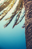 Retro Palm Tree Detail With Copy Space