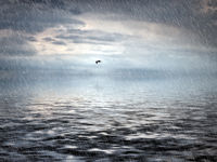 heavy rain falling on a dark sea with dramatic storm clouds reflected on the water and a single flying seagull