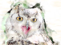 watercolor portrait of a long eared owl in close up with beak open