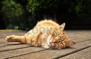Close-up of a cat lying on the wooden patio decking